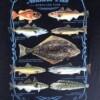 1015-varians-naerbilde-northern-fish