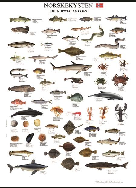 0803002093-fiskeplakat